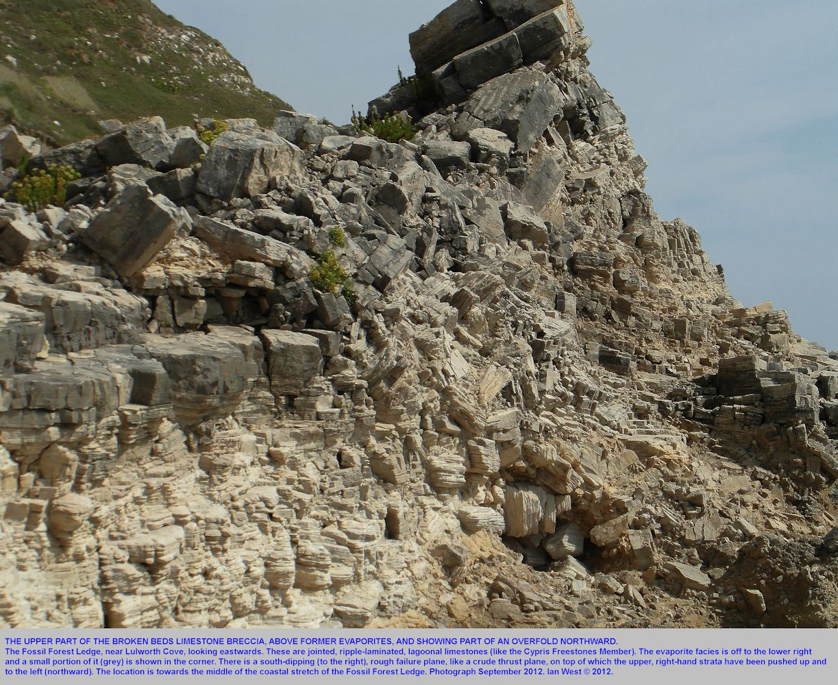The Broken Beds, upper part, near the middle of the Fossil Forest ledge, east of Lulworth Cove, Dorset, September 2012