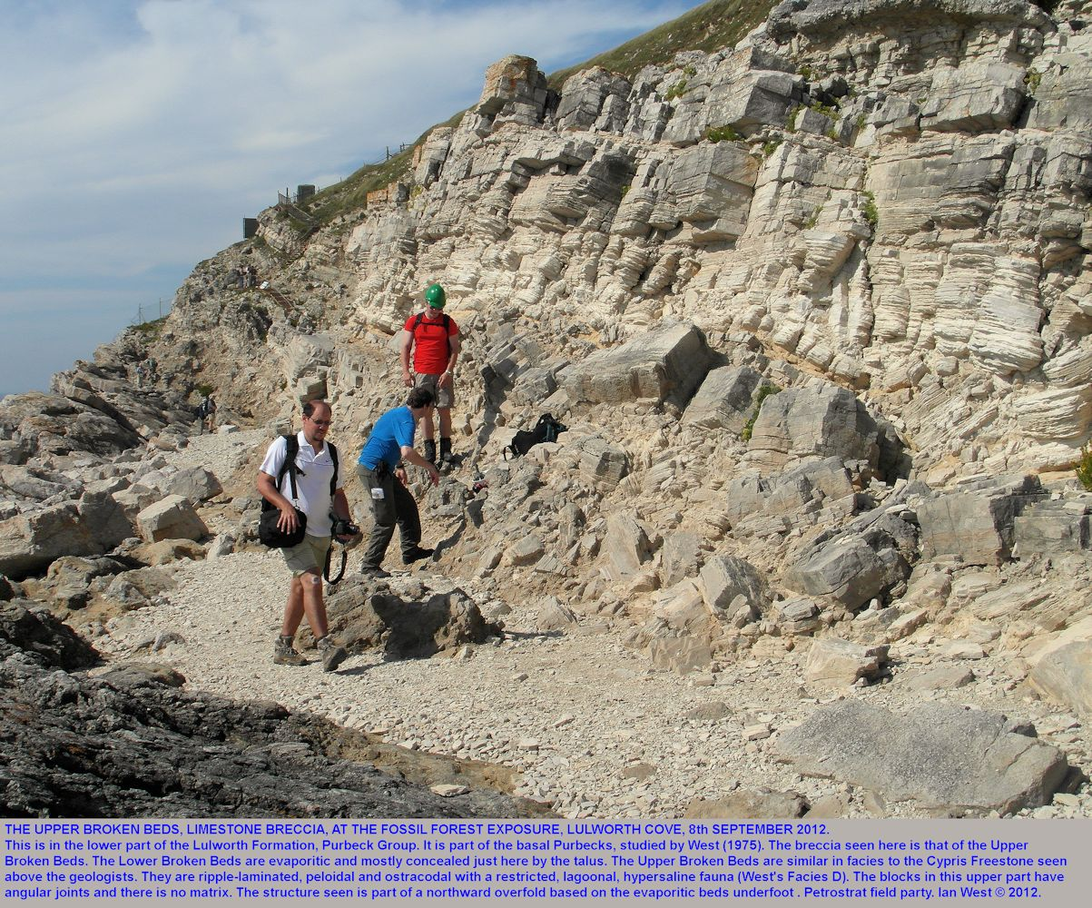 The upper Broken Beds, breccia, at the Fossil Forest ledge, east of Lulworth Cove, Dorset, with blocks of laminated peloidal limestone