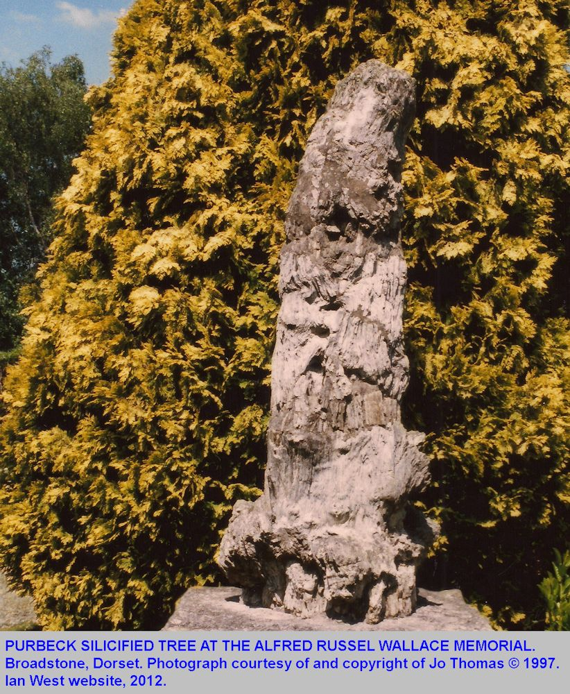 A Purbeck fossil tree used as monument to Alfred Russel Wallace, Broadstone, Dorset