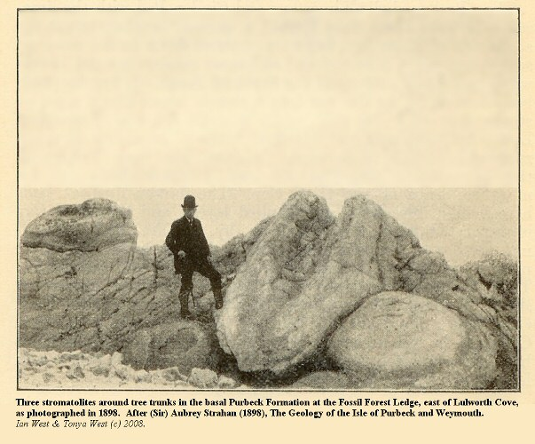 The classic three thrombolies at the Fossil Forest, east of Lulworth Cove, Dorset, as photographed in 1898
