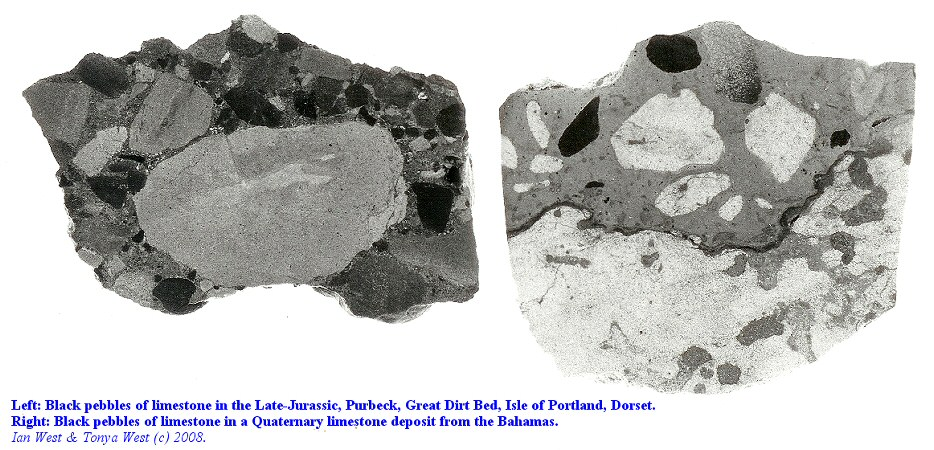 Comparison of limestone with black pebbles from the Purbeck Great Dirt Bed of Dorset and the Quaternary of the Bahamas