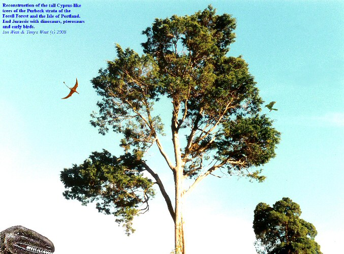 Reconstruction of the trees of the Late Jurassic, Fossil Forest, east of Lulworth Cove, Dorset