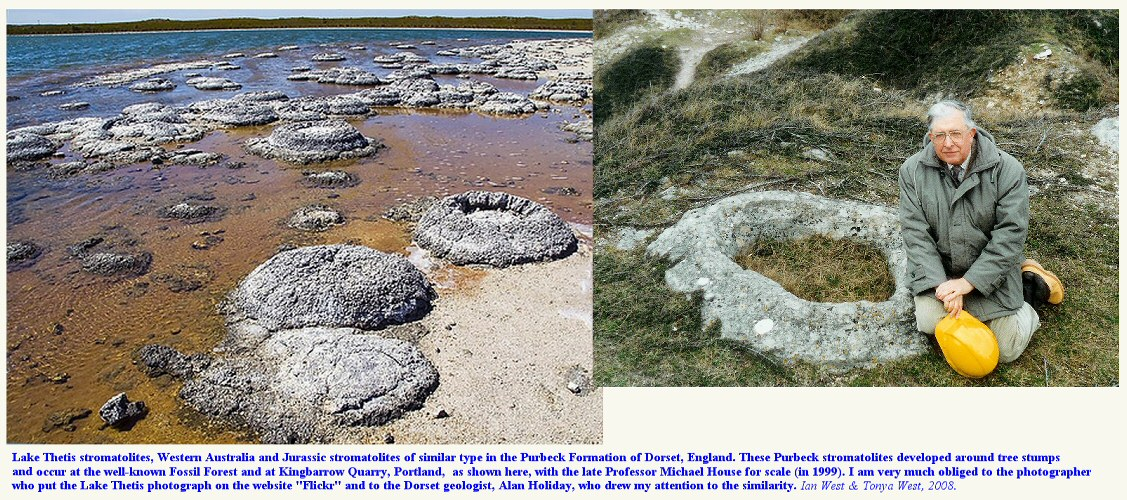 Recent thrombolites  at Lake Thetis, Western Australia and a Jurassic thrombolite in the Purbeck Formation at Kingbarrow Quarry, Isle of Portland, Dorset
