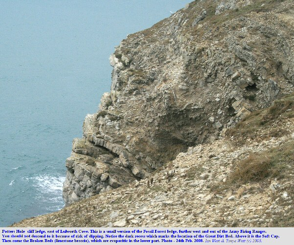 Potters Hole, a basal Purbeck exposure near the Fossil Forest, east of Lulworth Cove, Dorset, Feb 2008