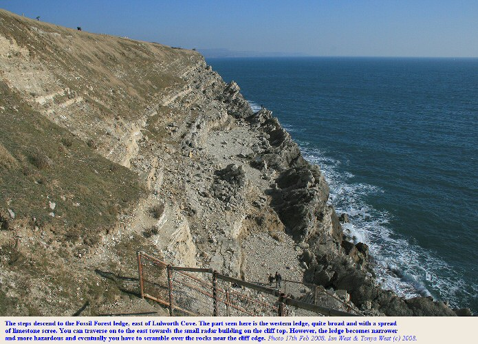 The Fossil Forest ledge, east of Lulworth Cove, Dorset, seen from the steps at the entrance