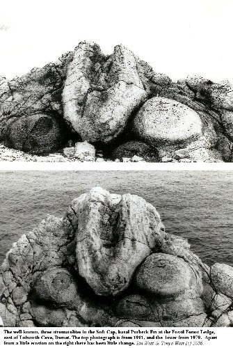 The well-known, three thrombolites of the Fossil Forest, east of Lulworth Cove, Dorset, in 1911 and 1979