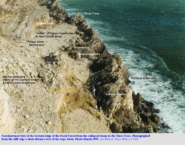 Western ledge of the Fossil Forest, east of Lulworth Cove, Dorset, shown in a foreshortened photograph, 1999