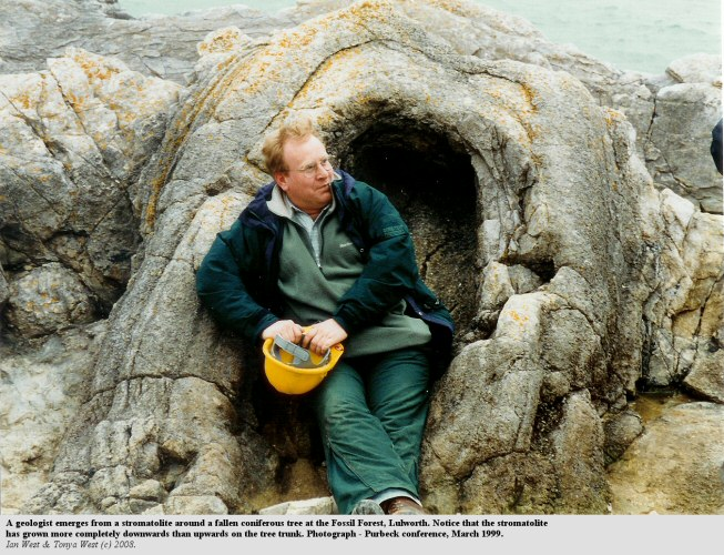 A geologist emerges from a thrombolite, Fossil Forest, east of Lulworth Cove, Dorset