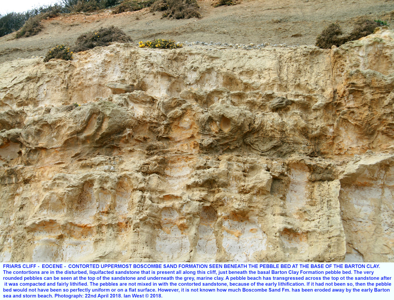 Sandstone with contortions due to penecontemporaneous liquifaction in the upper part of the Boscombe Sand Formation at Friars Cliff, near Highcliffe, April, 2018