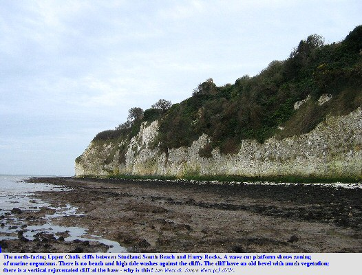 North-facing Chalk cliffs between Studland South Beach and Harry Rocks, Dorset, February 2007