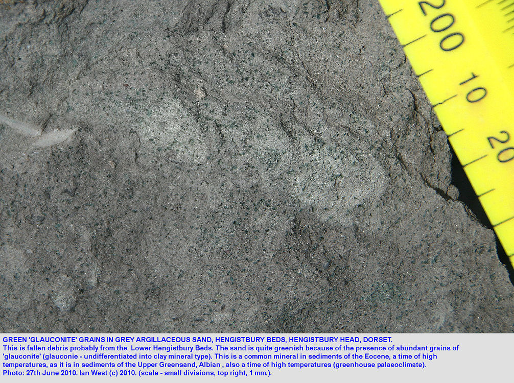 Glauconie or glauconite in fallen debris from the green basal part of the Lower Barton Clay, the