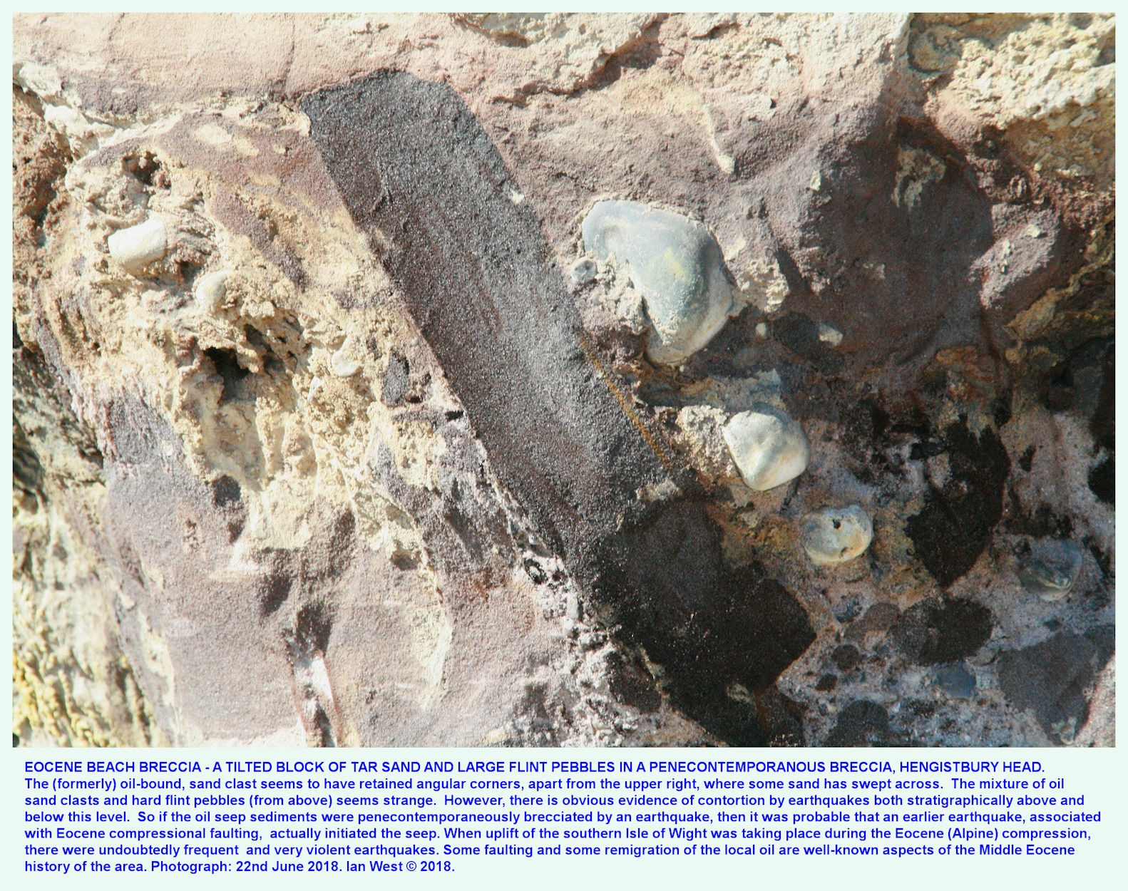 A tilted slab of former tar sand in penecontemporaneously- brecciated strata, effect of an Eocene earthquake, Hengistbury Head, Dorset