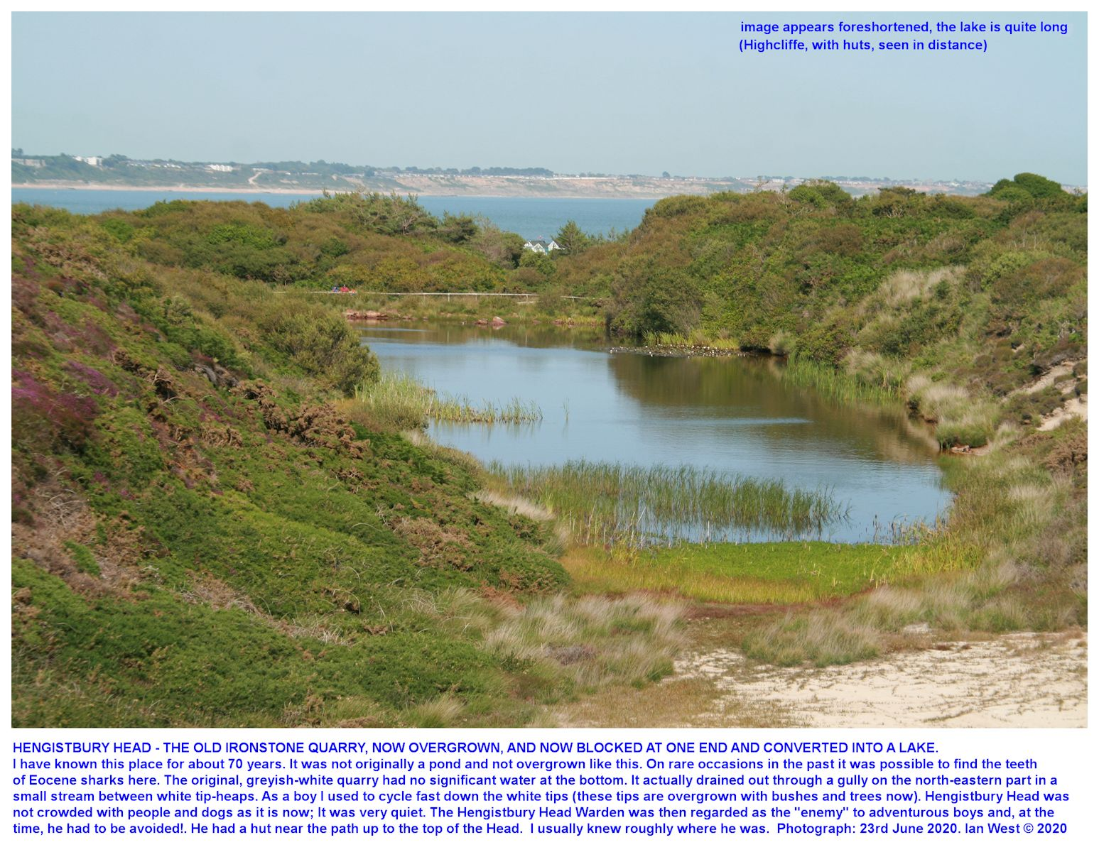 The old ironstone quarry of Hengistbury Head, now artificially flooded and rather overgrown, June 2020