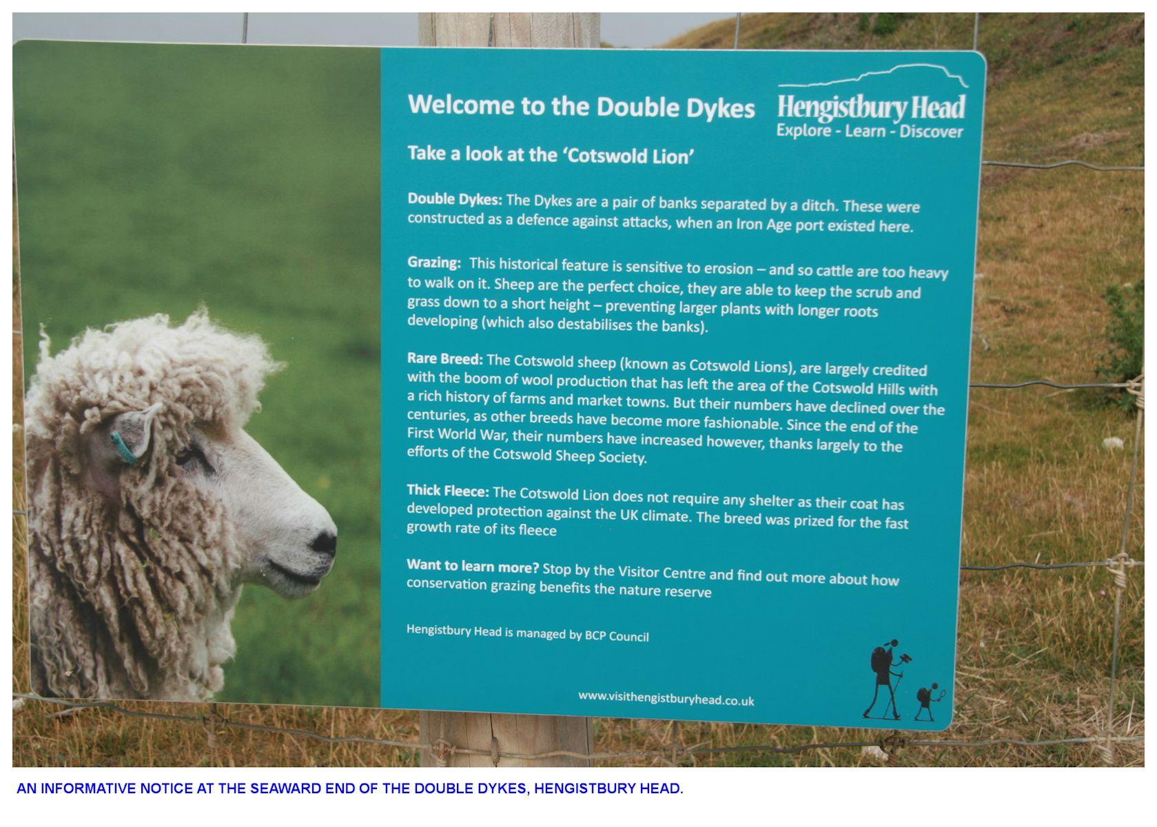 An information board at the Double Dykes about the grazing sheep, as seen in the year 2020