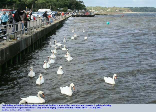 Mudeford Quay with a sturdy sea wall against the Run and swans and crab-fishing, Mudeford, Christchurch Dorset, England
