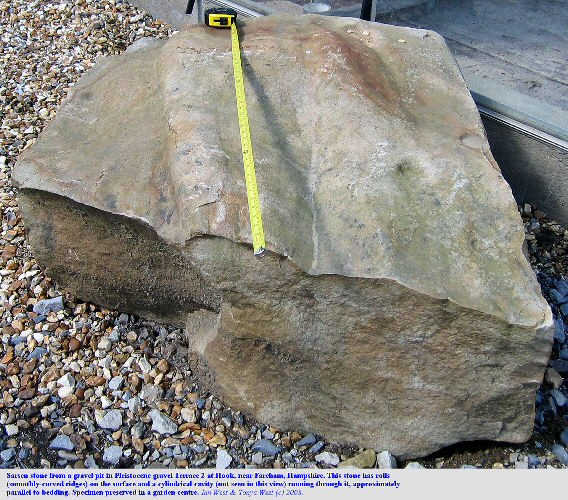 A large angular sarsen stone with rolls, from the Pleistocene gravel terrace 2 at Hook, near Fareham, Hampshire