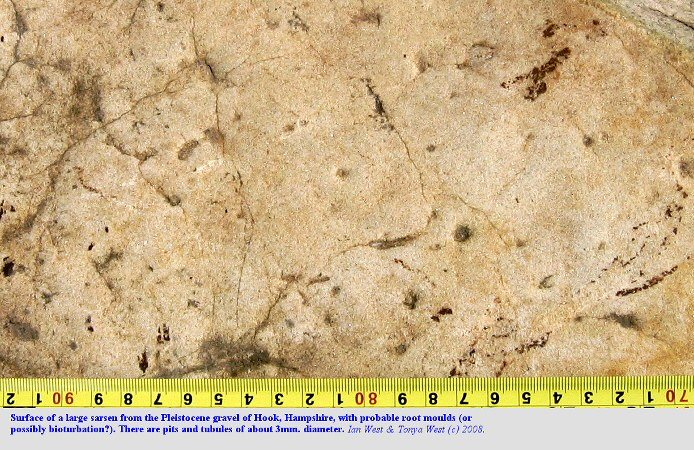 Probable root moulds in a sarsen stone from the Pleistocene gravel Terrace 2 of Hook, near Fareham, Hampshire