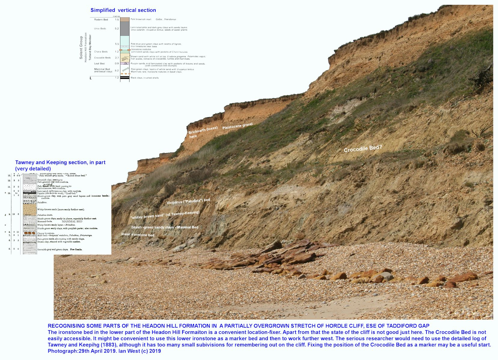 The sequence about the lower ironstone in the Headon Hill Formation, Hordle Cliff, with comparative details re the succession