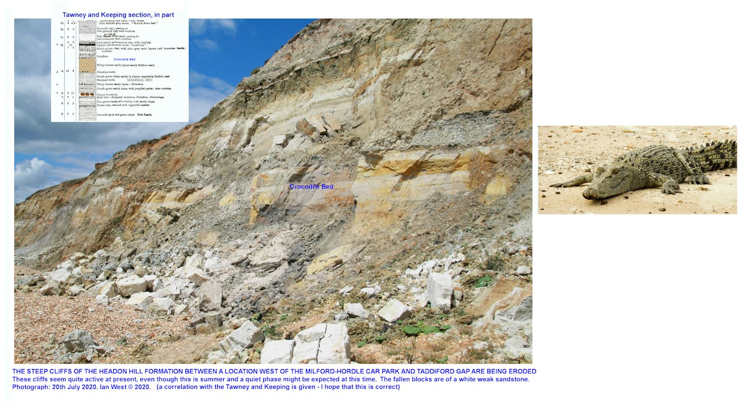 The location of the Crocodile Bed in the Headon Hill Formation, in about the middle of the cliff, to the east of Taddiford Gap, near Milford-on-Sea, it is not easy to find bones here