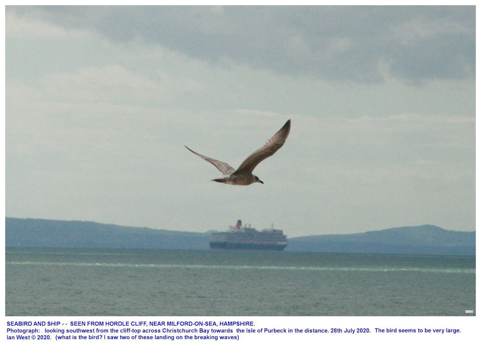 General environment at Hordle Cliff, Hampshire - a large sea bird that has just been down on the waves, 28th July 2020