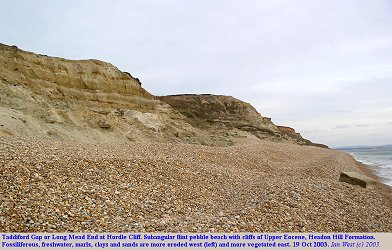 General view of the Headon Hill Formation at Taddiford Gap, Hordle Cliff, Hampshire in 2003