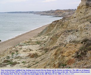 Cliff west of Taddiford Gap, Hordle Cliff, Hampshire