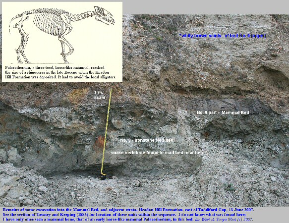 Excavation in the Mammal Bed, Headon Hill Formation, Eocene, east of Taddiford Gap, Hordle Cliff, Hampshire