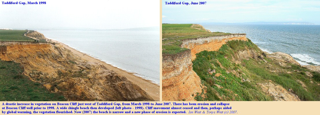 Increase in vegetation growth on Beacon Cliff, west of Taddiford Gap, near Hordle Cliff, Milford, Hampshire