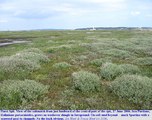 General view of the saltmarshes behind Hurst Spit, Hampshire, 27 June 2006
