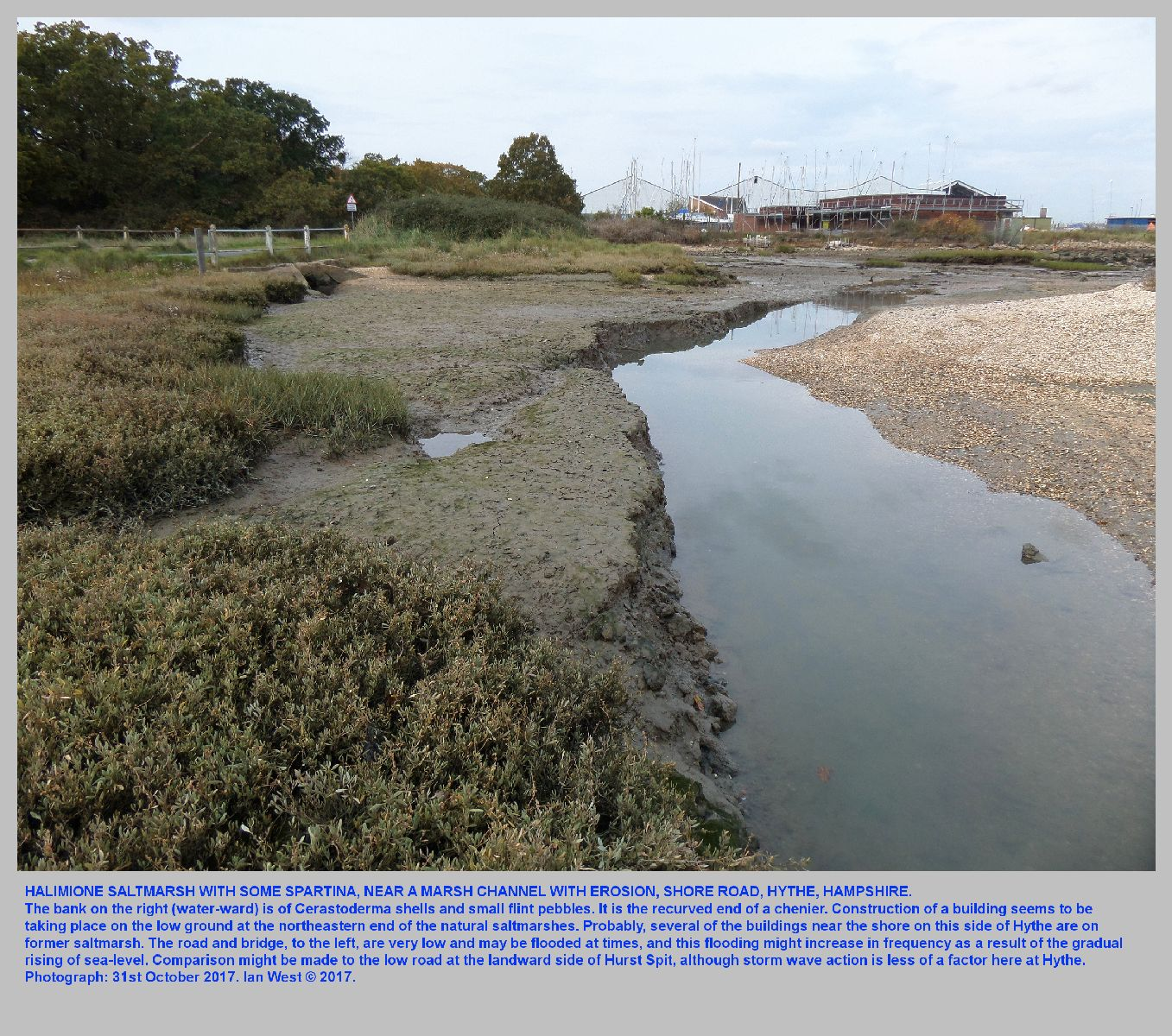 Halimione saltmarshes and with some Spartina, near the bridge at the Hythe saltmarshes, Hampshire, 31st October 2017