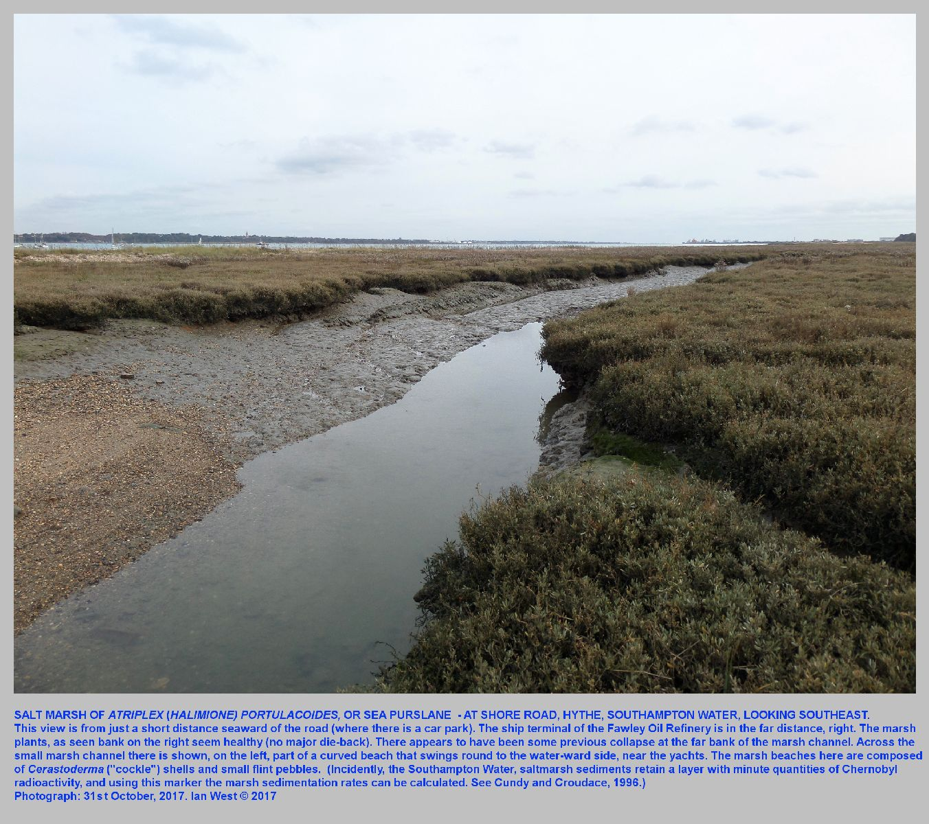 The saltmarsh at Hythe, Hampshire, with sea purslane, and as seen in October, 2017