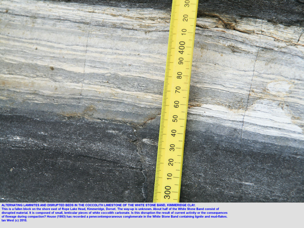 Laminites and disrupted beds within the White Stone Band, a coccolith limestone, east of Rope Lake Head, Kimmeridge, Dorset