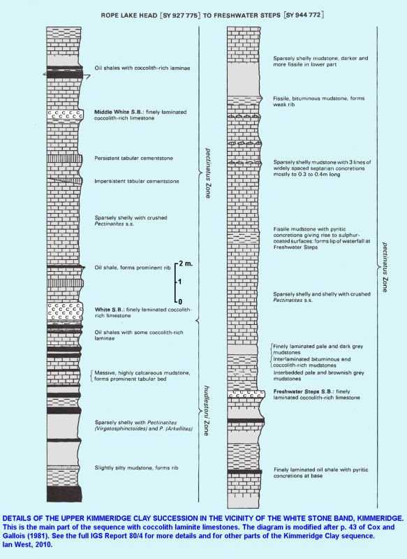 Log of the succession of part of the Upper Kimmeridge Clay including the white coccolith limestones east of Kimmeridge Bay, Dorset, after Cox and Gallois
