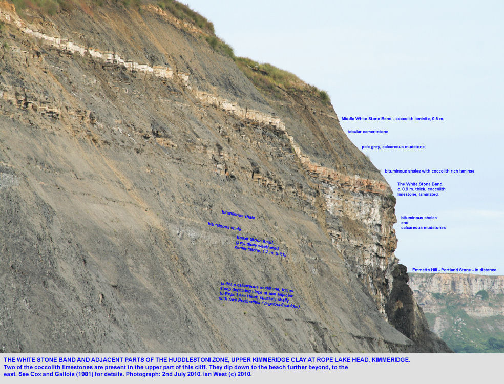 The White Stone Band and associated strata of the Upper Kimmeridge Clay in the cliff at Rope, Lake Head, east of Kimmeridge, Dorset, July 2010