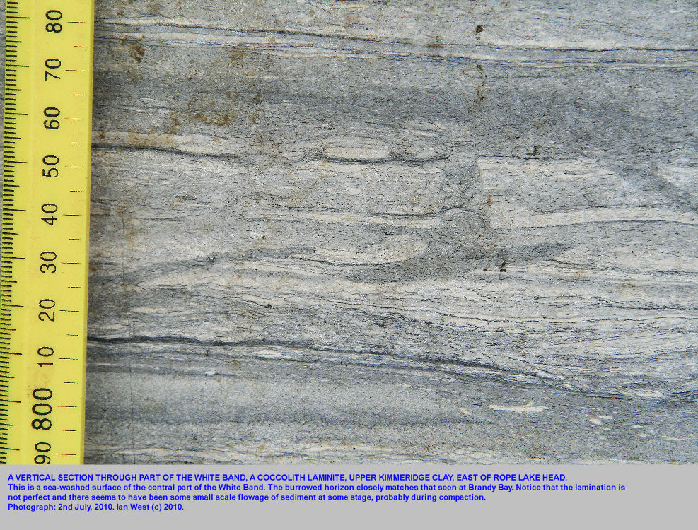 A sea-washed section through the White Band, a coccolith laminite with some burrows, east of Rope Lake Head, Kimmeridge, Dorset, 2010