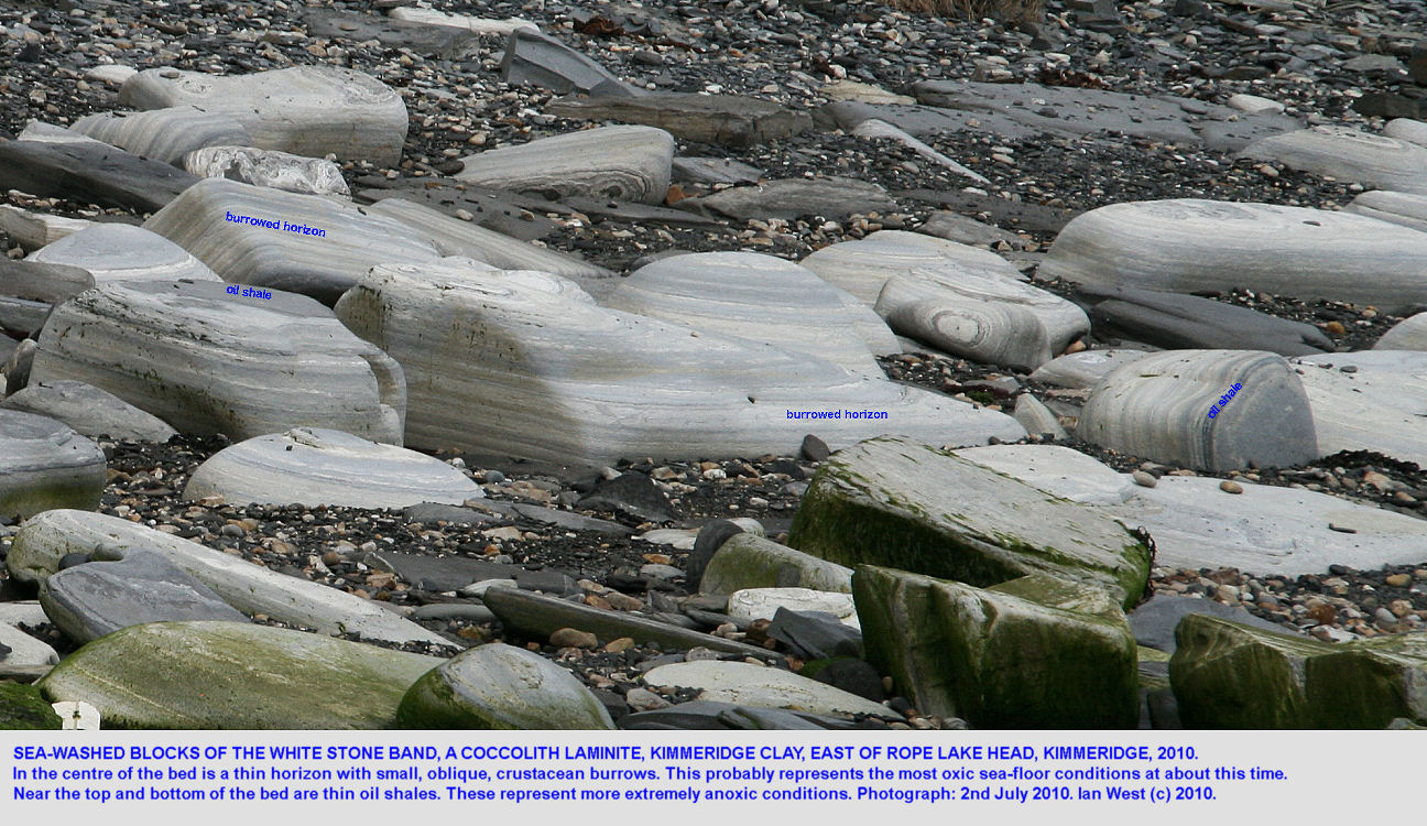Various fallen and wave-washed blocks from the White Stone Band, a coccolith limestone, Upper Kimmeridge Clay, east of Rope Lake Head, Kimmeridge, Dorset, 2010