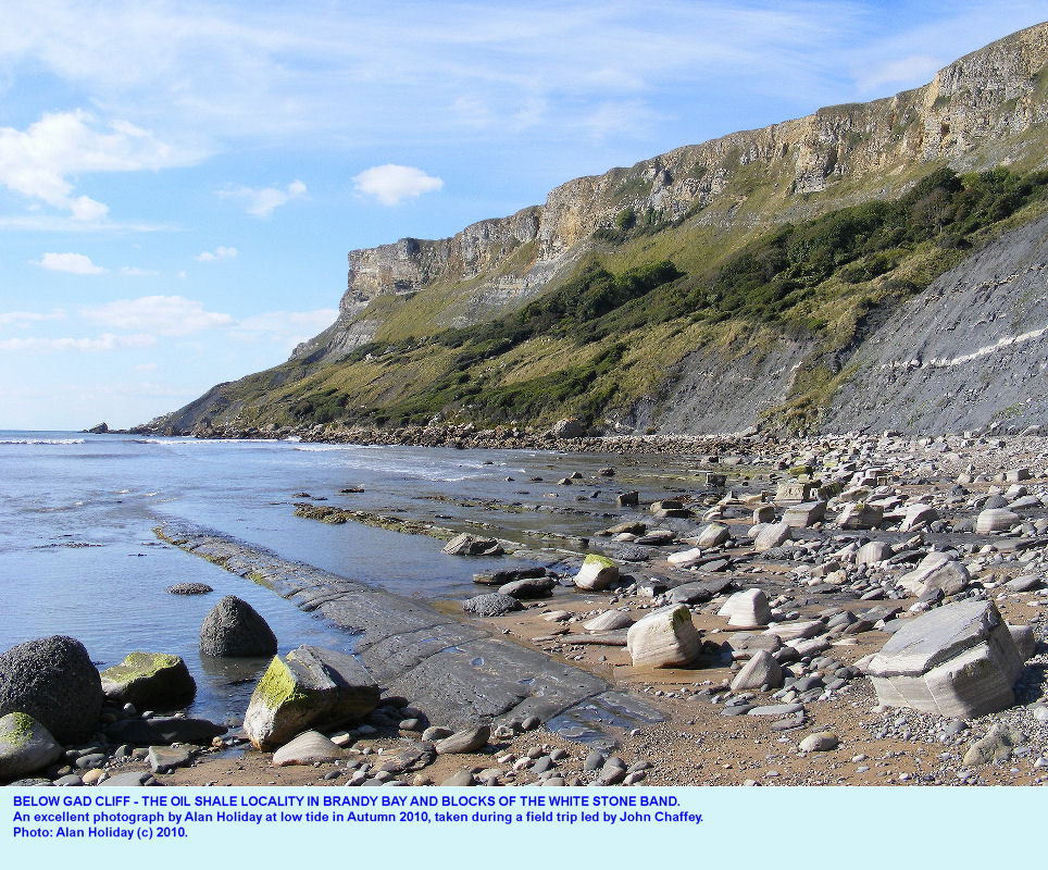 Ledges of Kimmeridge Oil Shale in the Kimmeridge Clay, below Gad Cliff, west of Kimmeridge,  Dorset, photo by Alan Holiday, 2010