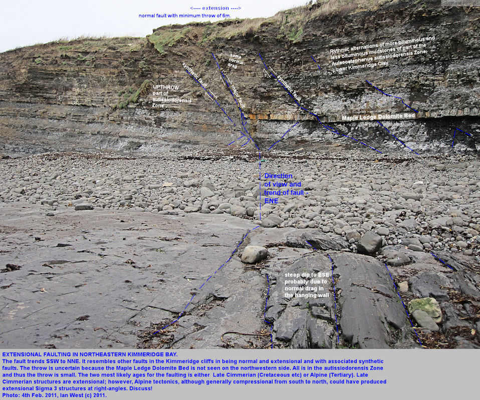 Maple Ledge Fault  a normal fault in Kimmeridge Bay, Dorset, downthrowing the Maple Ledge Dolomite Bed