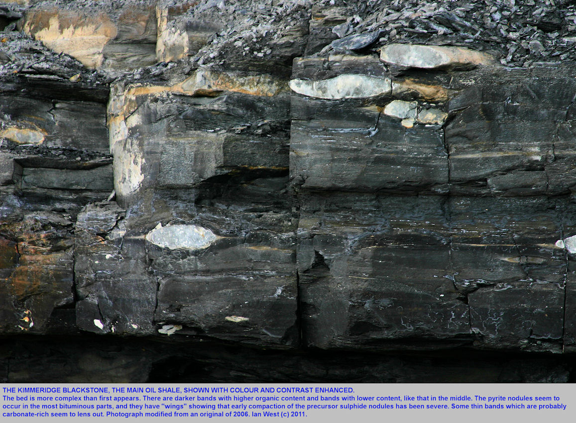 The Kimmeridge Blackstone or oil shale, shown with enhanced colour and contrast to render details visible