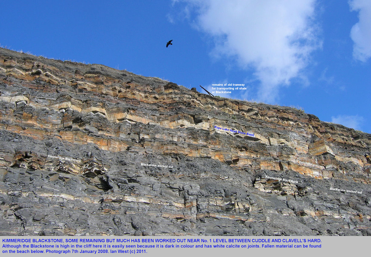 The Kimmeridge Blackstone or Oil Shale has been mined in the cliffs near No. 1 Level, between Cuddle and Clavell's Hard, east of  Kimmeridge, Dorset, January 2008