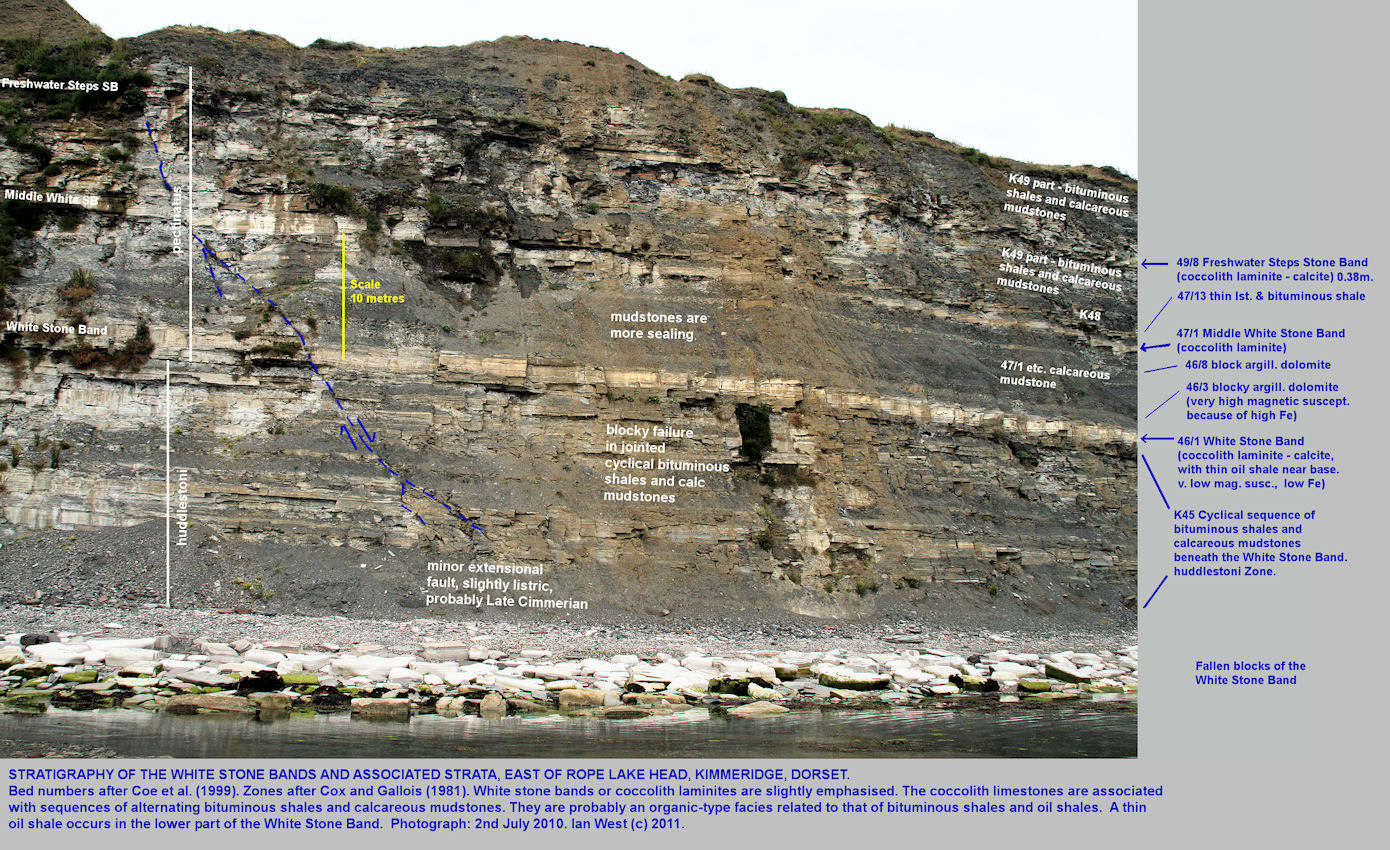 The three White Stone Bands in the Upper Kimmeridge Clay, east of Rope Lake Hole, Kimmeridge, Dorset, 2010, introduction