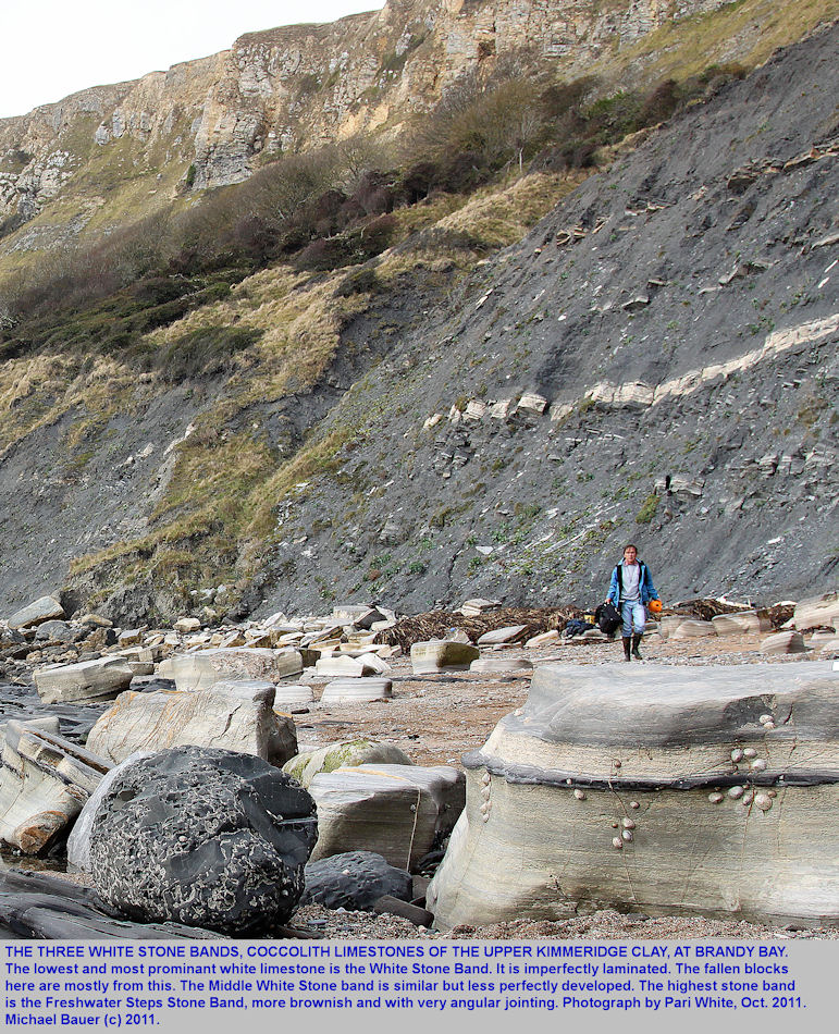 The three White Stone Bands, or coccolith limestones in the Upper Kimmeridge Clay at Brandy Bay, west of Kimmeridge Bay, Dorset, October 2011
