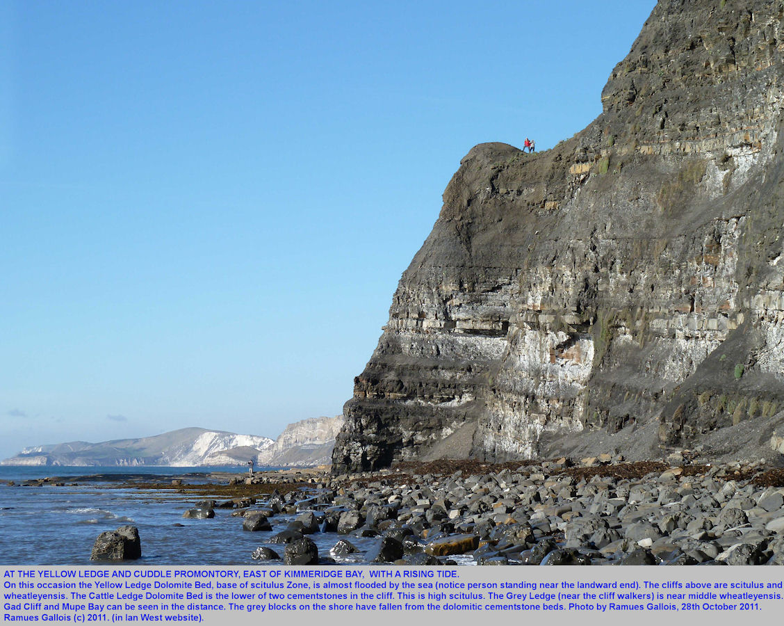 The cliff of Upper Kimmeridge Clay at Yellow Ledge and Cuddle, east of Kimmeridge Bay, Dorset, 2011