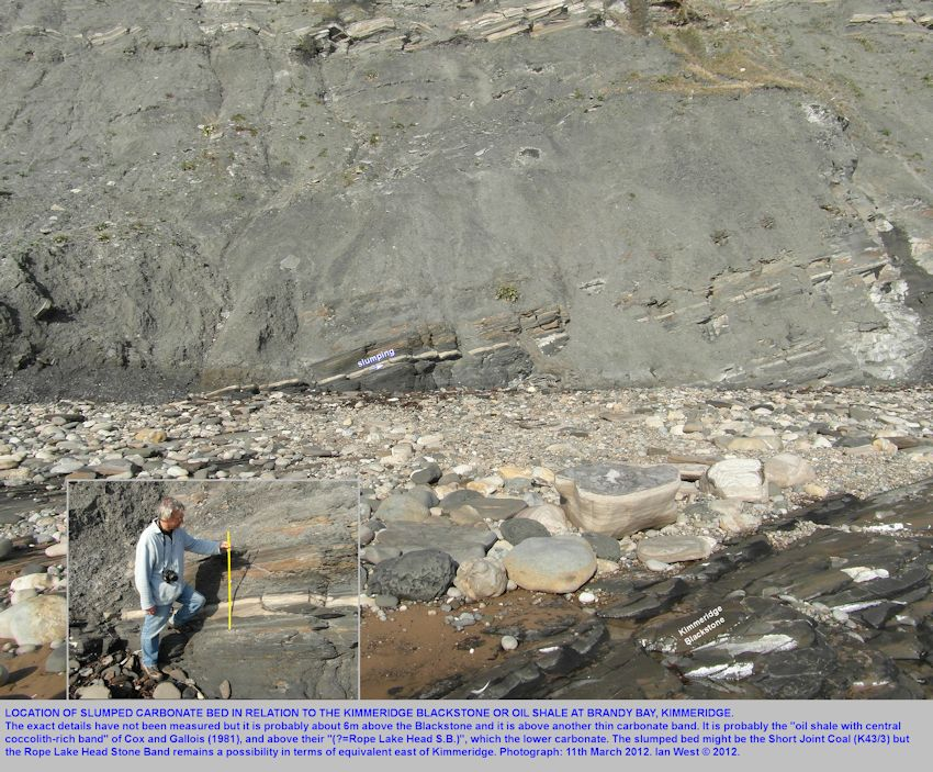 Location of the thin, slumped carbonate bed above the Blackstone at Brandy Bay, Kimmeridge, Dorset, March 2012