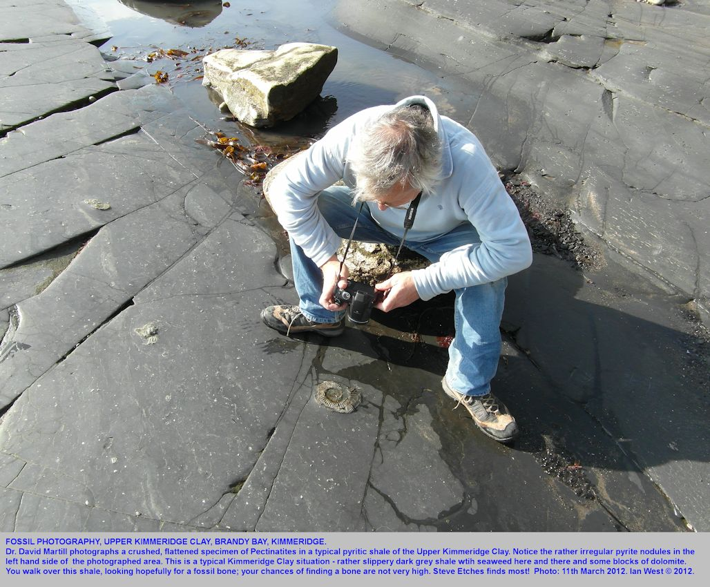Dr David Martill photographs a crushed specimen of Pectinatites, Upper Kimmeridge Bay, Brandy Bay, Dorset, March 2012