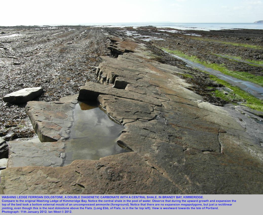 Washing Ledge Dolostone Bed of the autissiodorensis Zone, Lower Kimmeridge Bay, Dorset, projecting seaward, March, 2012