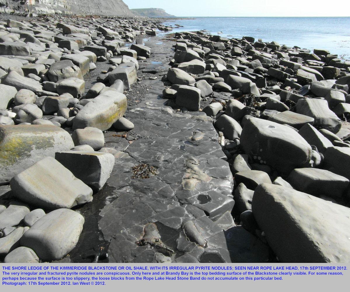 Shore ledge of oil shale or Blackstone, Upper Kimmeridge Clay, west of Rope Lake Head, Kimmeridge, Dorset, 17th September 2012