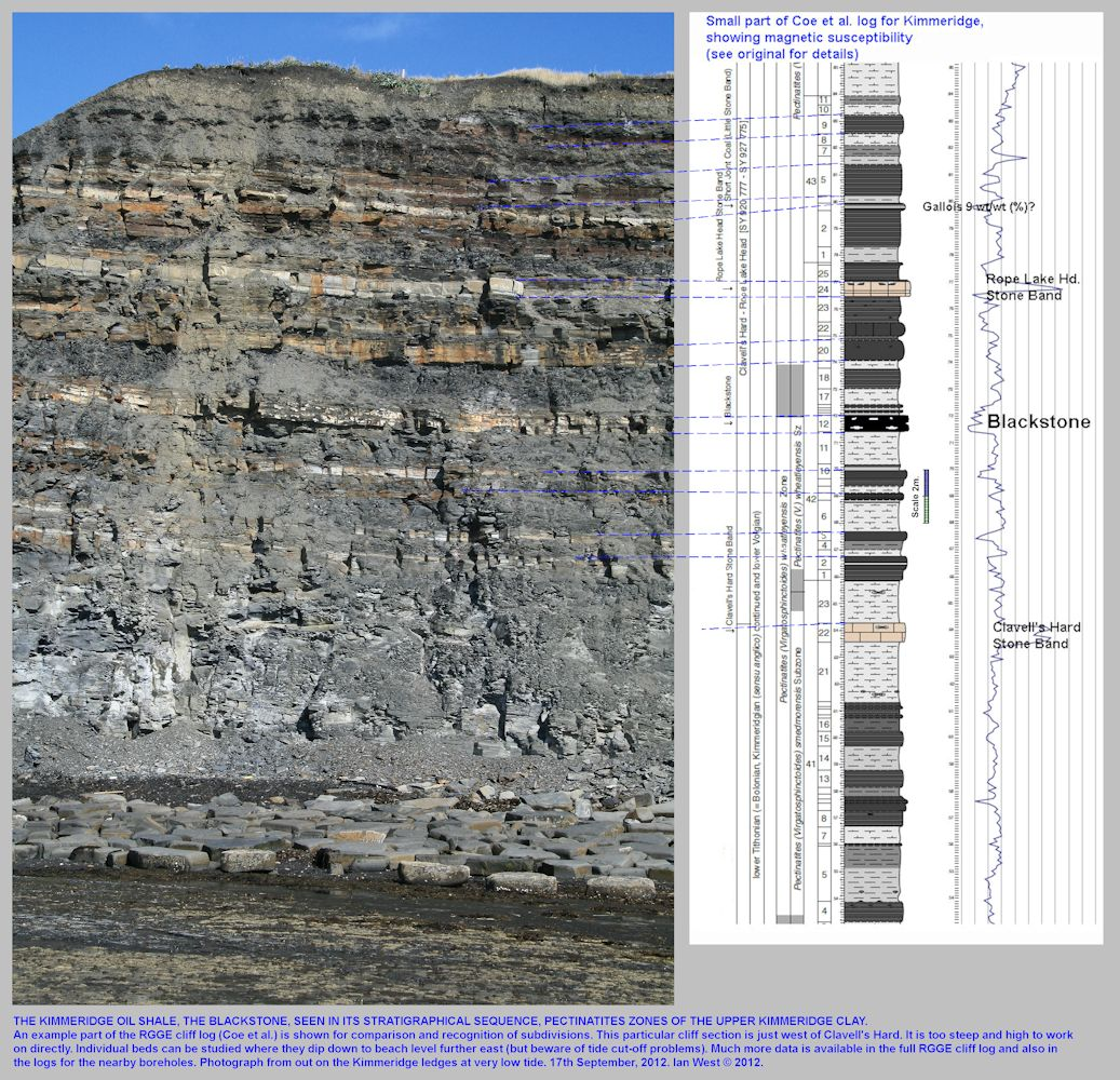 A vertical sequence of Upper Kimmeridge Clay containing the Kimmeridge Blackstone or oil shale, west of Clavells Hard, Kimmeridge, Dorset