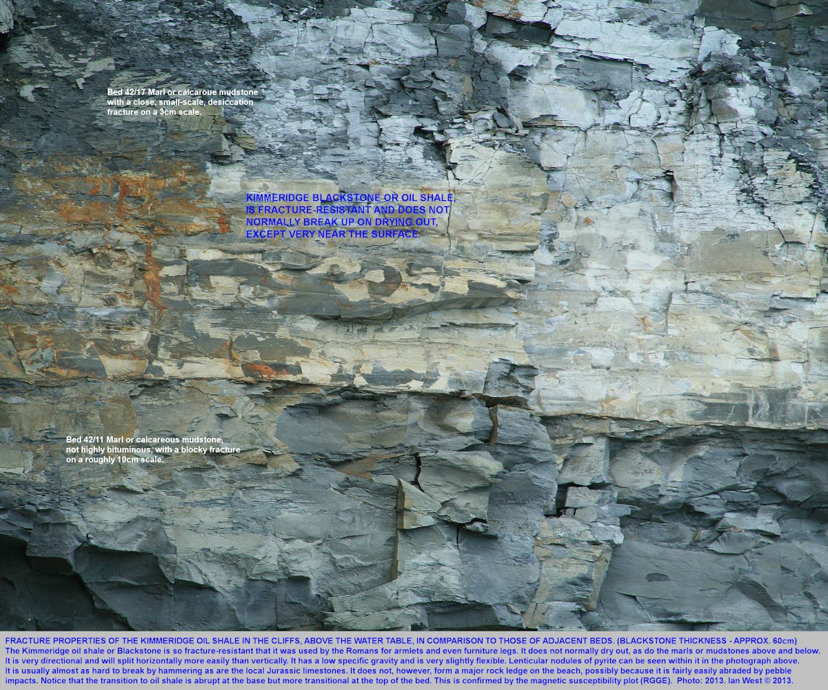 Desiccation or drying out fractures above the water table in the Kimmeridge oil shale and adjacent strata, east of Clavell's Hard,  Kimmeridge, Dorset, June 2013