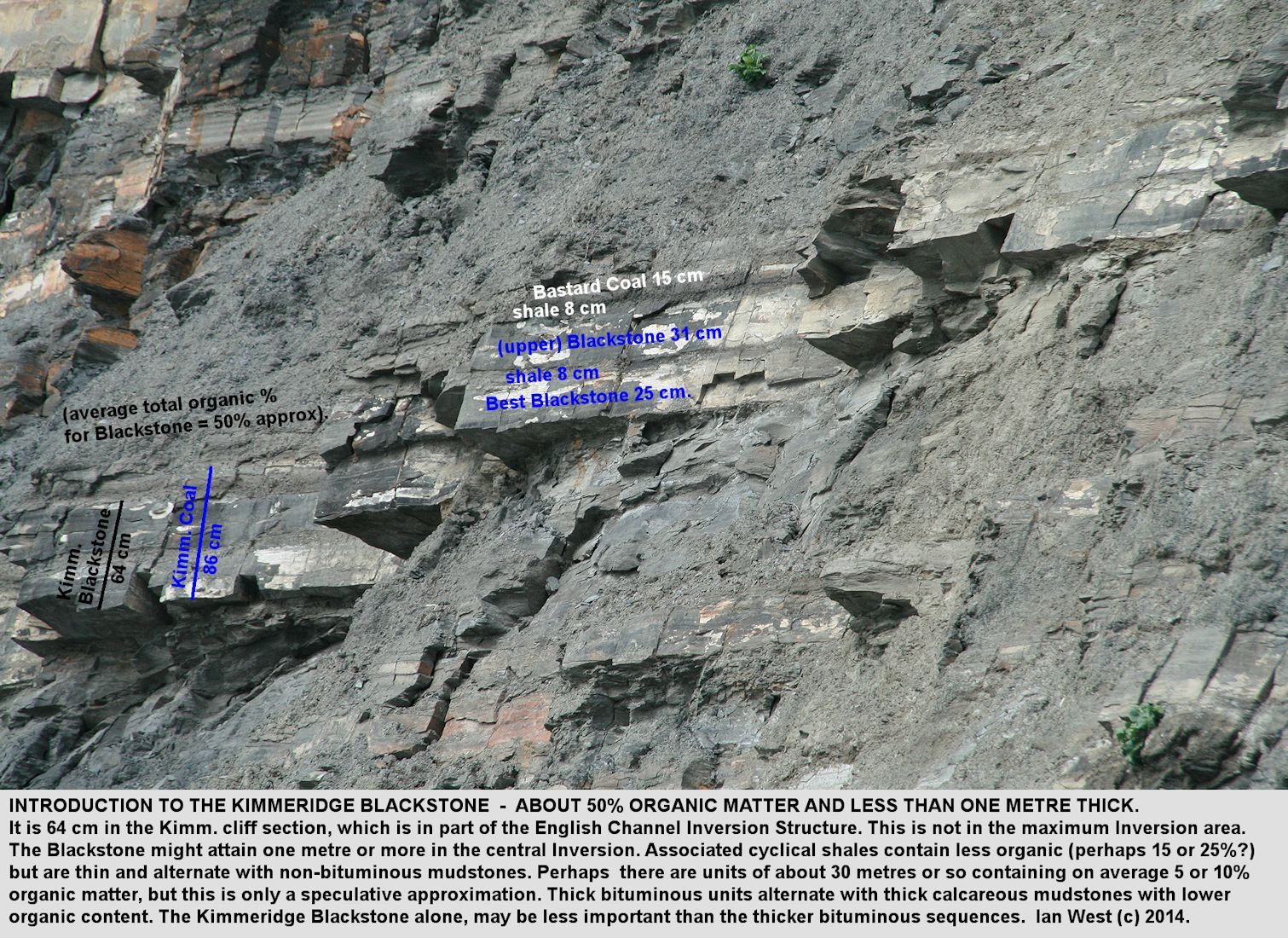 Thicknesses of the Kimmeridge Coal and the Kimmeridge Blackstone or oil shale, in the Kimmeridge Clay, near Clavell's Hard,  Kimmeridge, Dorset, with comments on oil source rock potential and approximate percentages